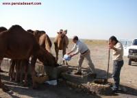 چاه دستکن و آب خوردن شتر ها