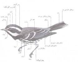 ريخت شناسی پرندگان