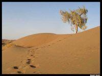 جاذبه های گردشگری کویر در مظلومیت مانده است