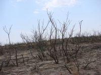 تغییر اقلیم و بیابانزایی