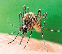 نکاتی در مورد پشه ها و نحوه مبارزه با آنها در سفرها
