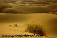جاذبه های گردشگری طبیعی آران و بیدگل