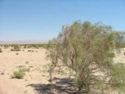 معرفی 9 مورد گونه گیاهی در کویر