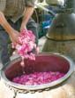 تاريخچه گل و گلاب کاشان