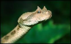 شناسایی ۴۰ گونه خزنده در قم/ خطر انقراض۲ گونه خزنده