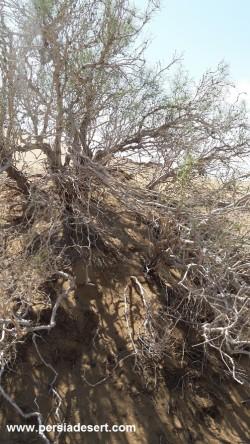 گزارش تصویری از طبیعت کویر مرنجاب
